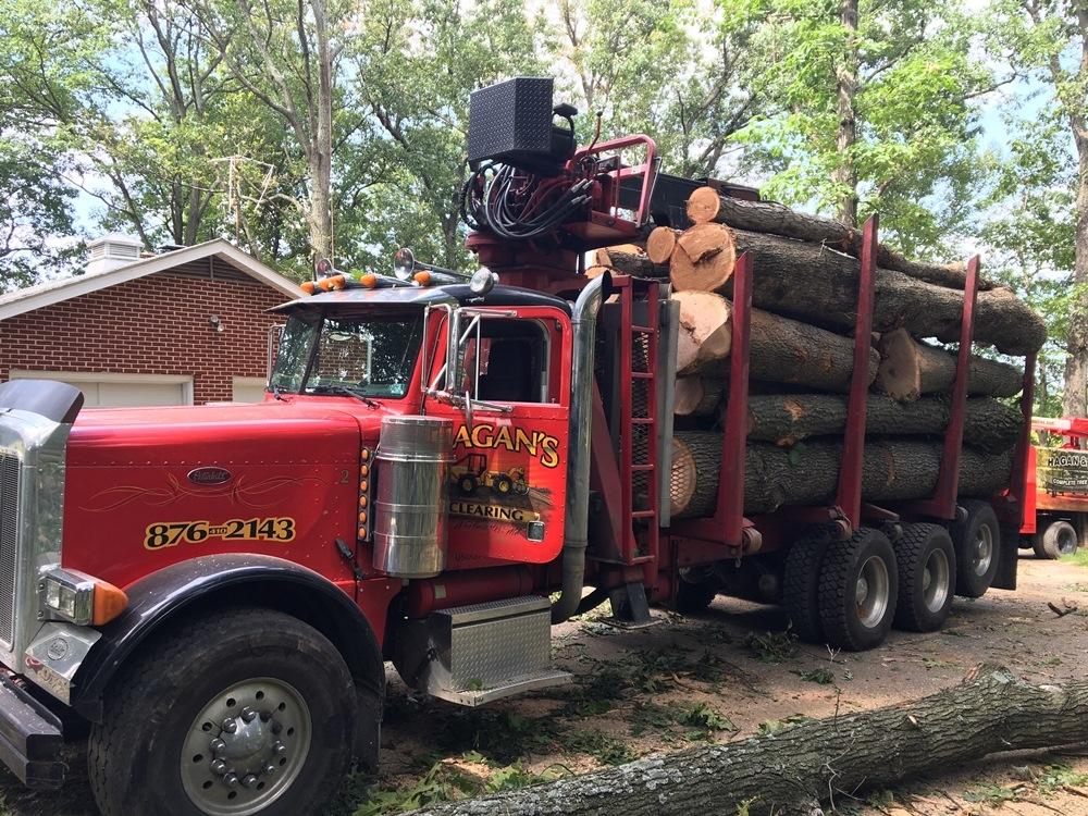 Hagan & Sons Tree Service image 0