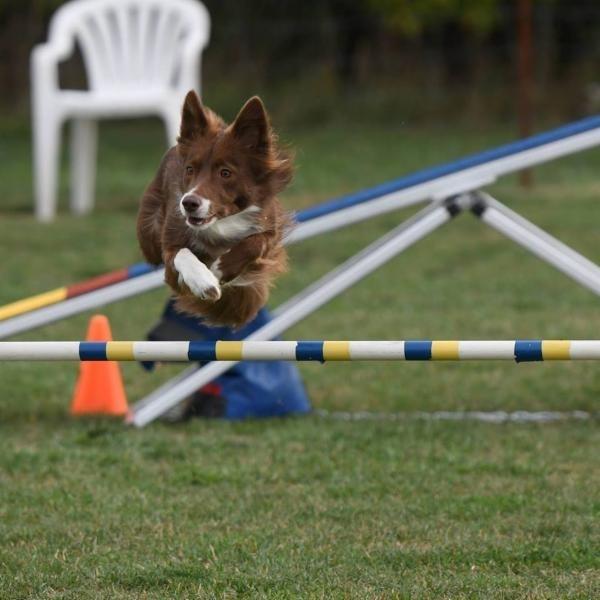 Jane Book Dog Obedience School in Beamsville