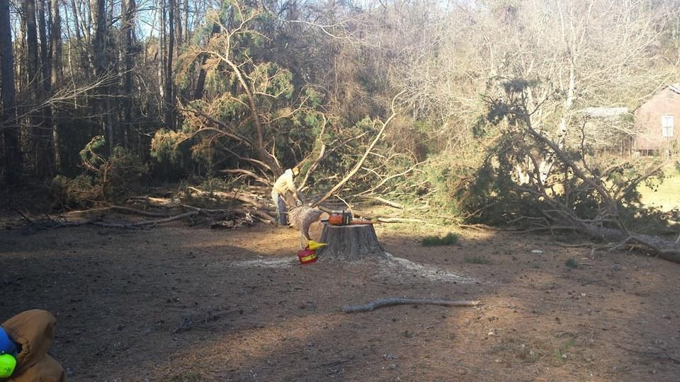 Woodswalker Tree Service image 1