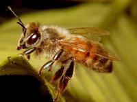 D & T Pest and Termite Control, Inc. image 4