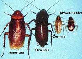 Strive Pest Control, Llc image 1