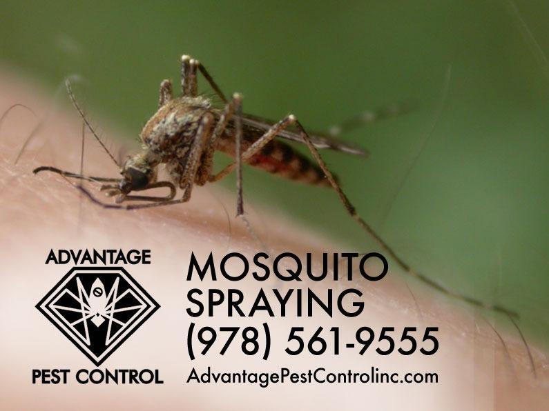 Advantage Pest Control, Inc image 1