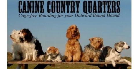 Canine Country Quarters image 0