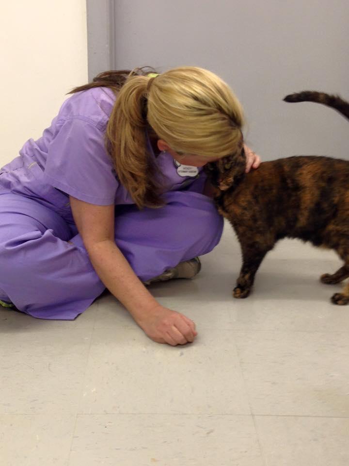 Houston Veterinary Clinic image 9