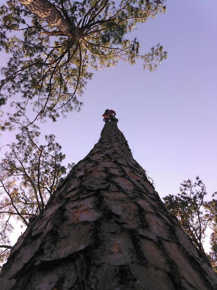 Tim Kilpatrick Tree Service image 6
