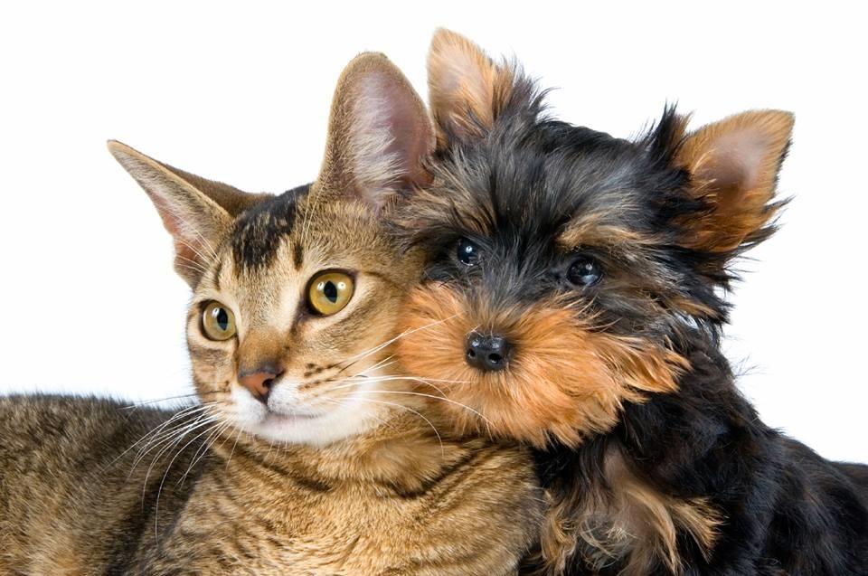 Luxurious Pet Spa