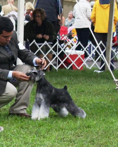 Bark Avenue Pet Salon image 6