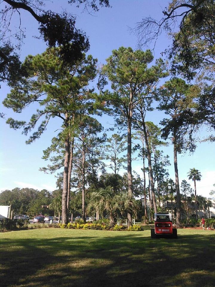 Tim Kilpatrick Tree Service image 5