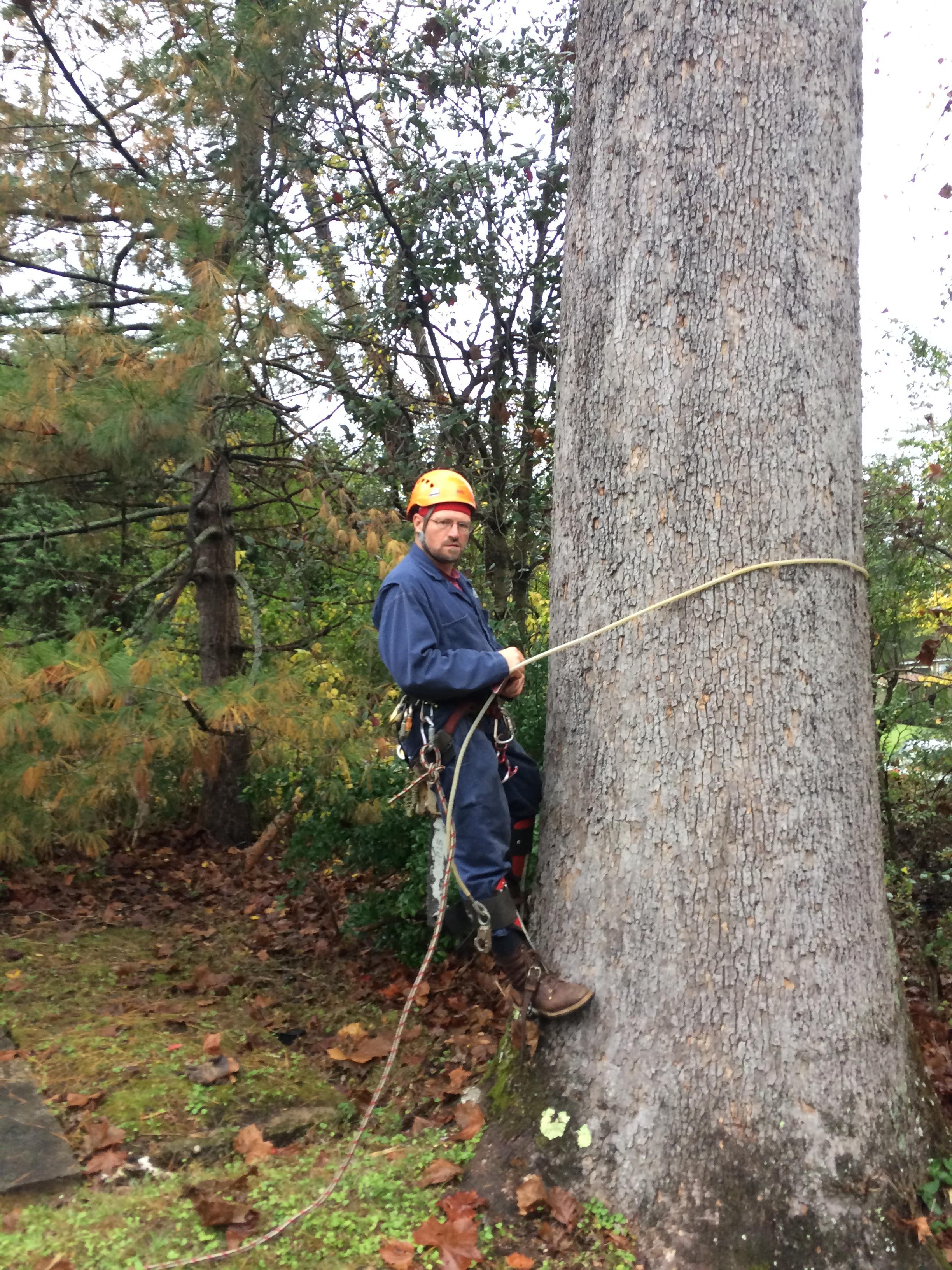 Jacob's Tree Service image 4