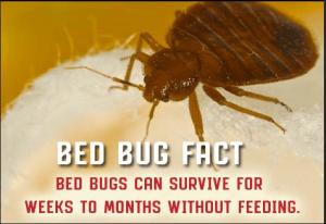 TLC Bed Bugs K-9 Inspection Service image 4