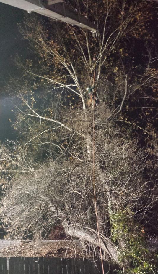 Darrell's Tree & Stump Service - ad image