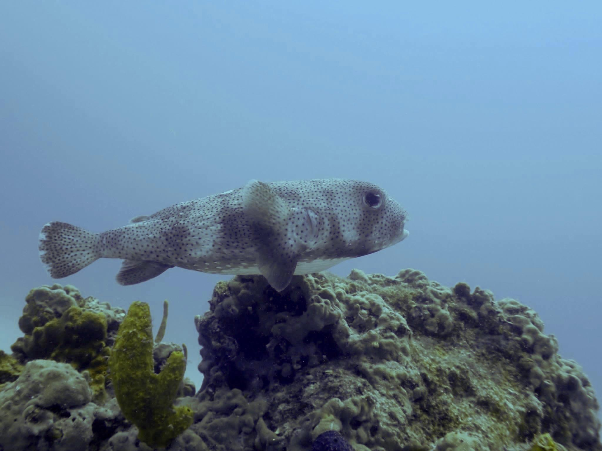 Underwater World Inc. image 4