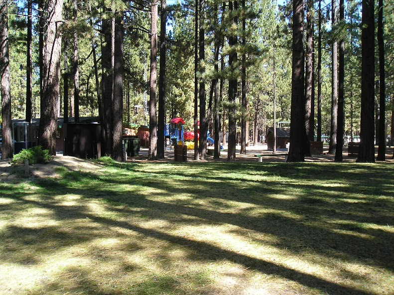 Tahoe Valley Campground image 3