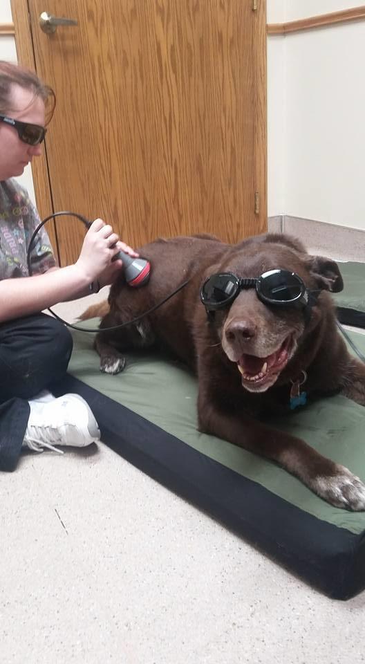 West Wichita Pet Clinic image 8