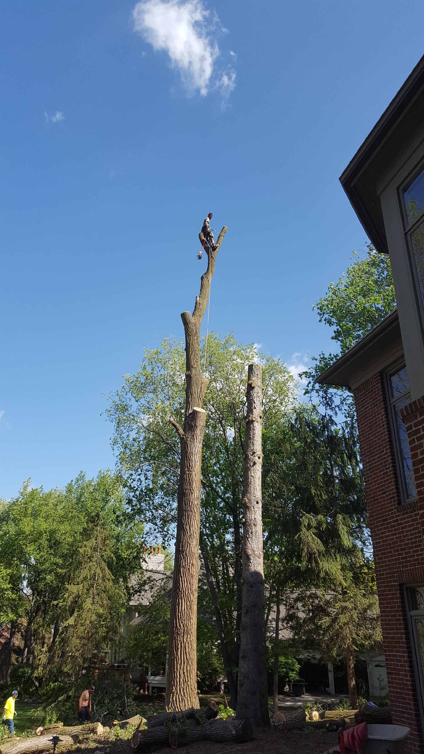 Coffman's Tree Service image 22