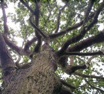 Good  Air Tree Service LLC