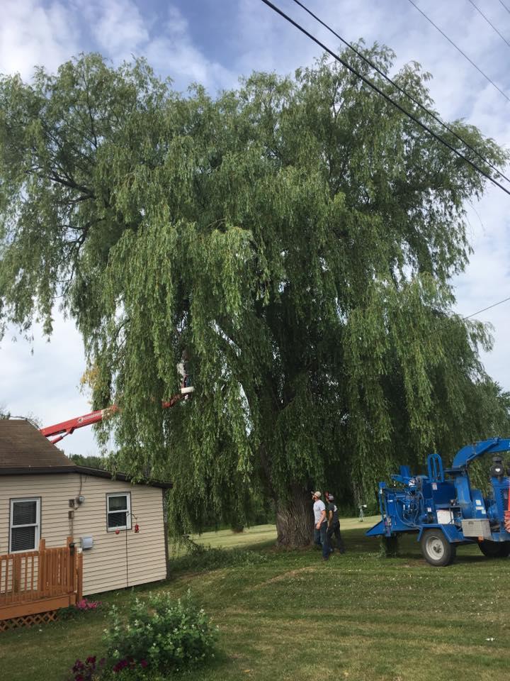 A-1 Tree Service, LLC image 6