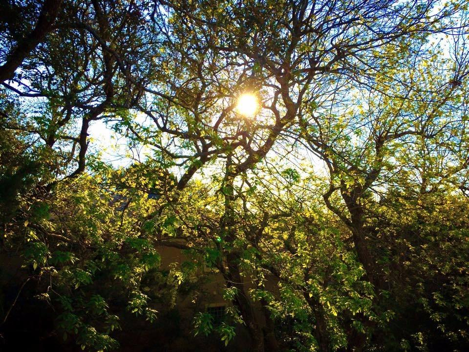 ABC Tree Service image 2