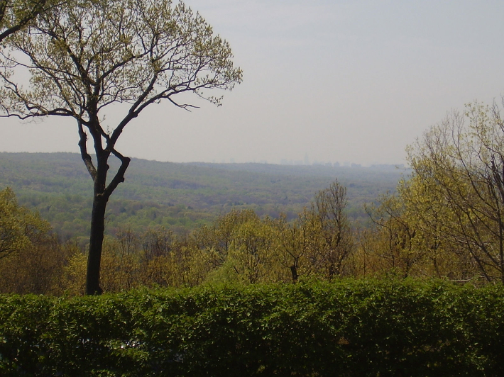 Hill Treekeepers image 10