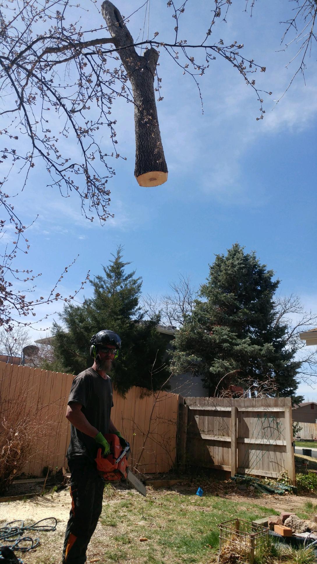 Mortensen Tree Service, Inc. image 8