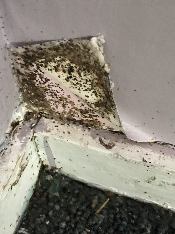 TLC Bed Bugs K-9 Inspection Service image 10