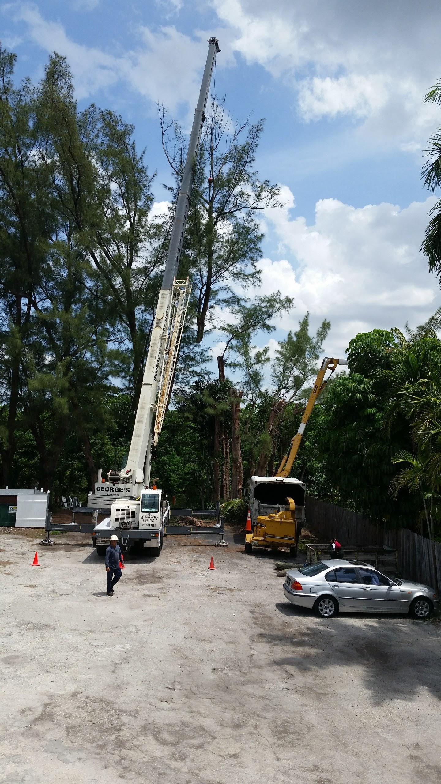 Jireh Tree Care image 9