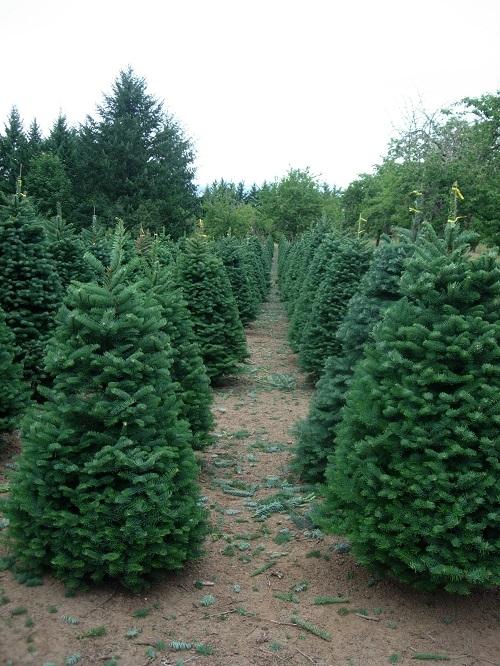 Crossties Tree Farm LLC image 3