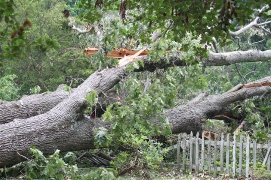 Sprouse's Tree Service LLC image 2