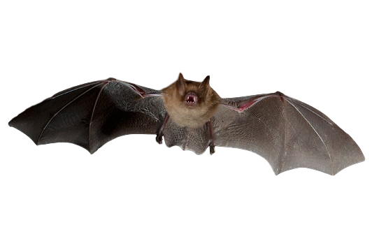 Michigan Bat Control, Inc. image 1