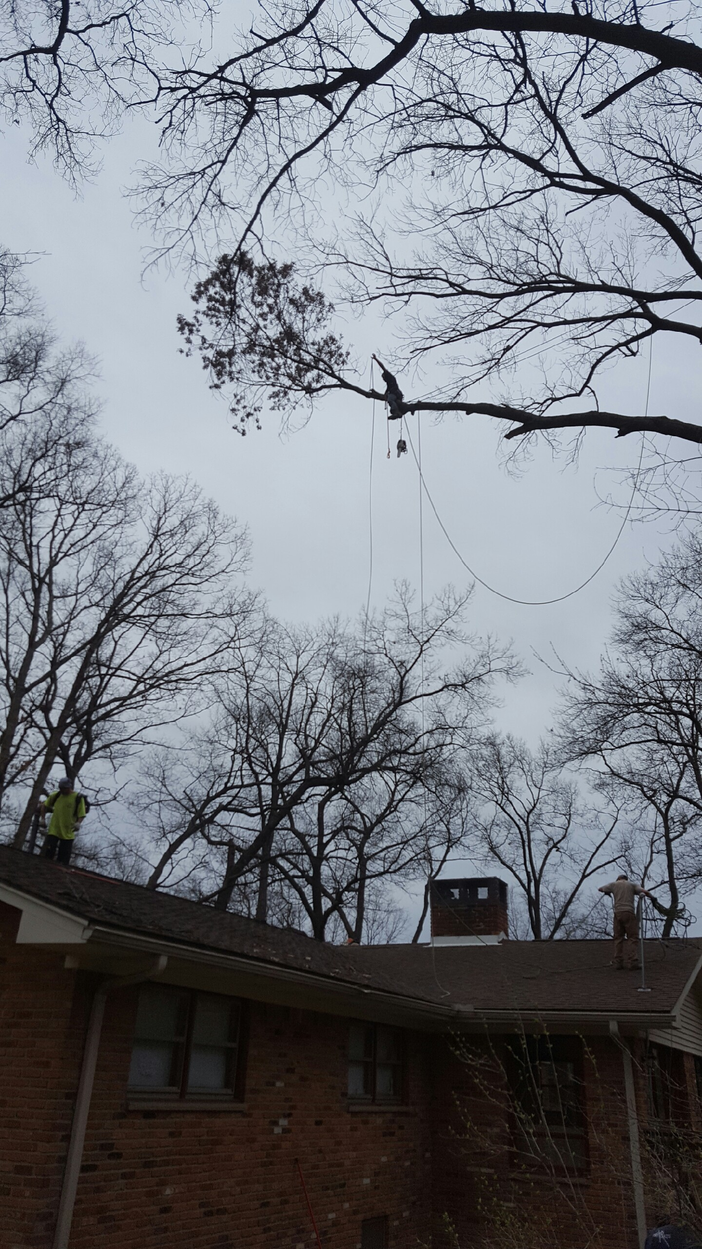 Coffman's Tree Service image 14