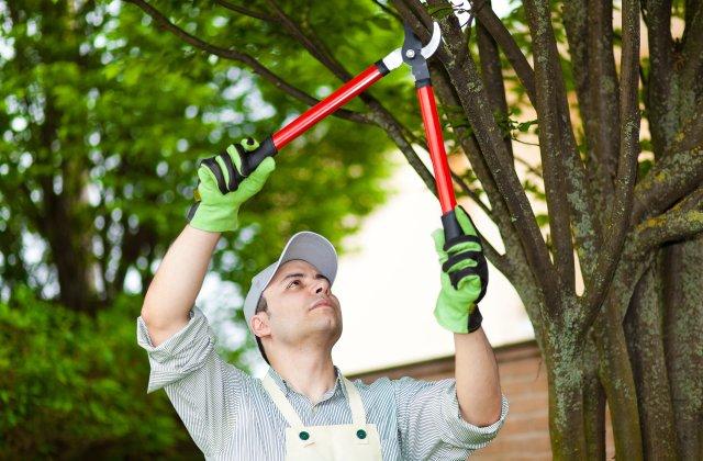 J & J Tree Services image 1