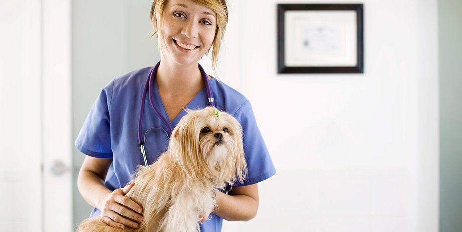 Animal Clinic Southside image 4