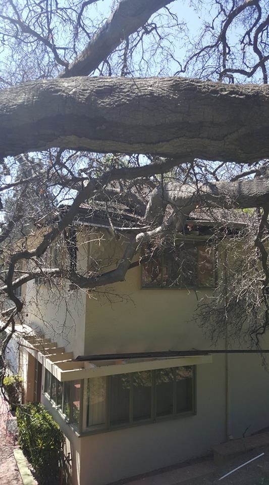Dead trees will fail and fall onto homes if they are not removed promptly.