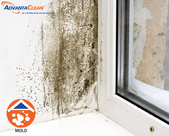 AdvantaClean of Sandy Springs image 5
