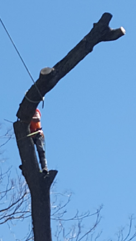 Coffman's Tree Service image 34