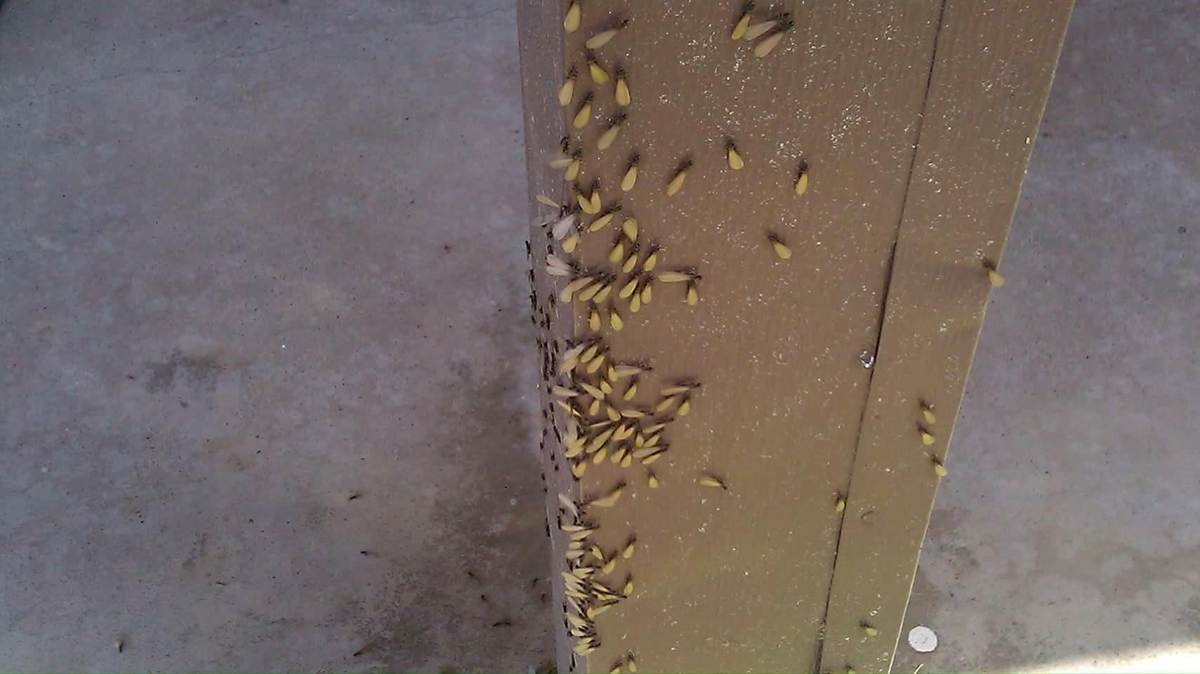 Tri-County Exterminating Co image 3