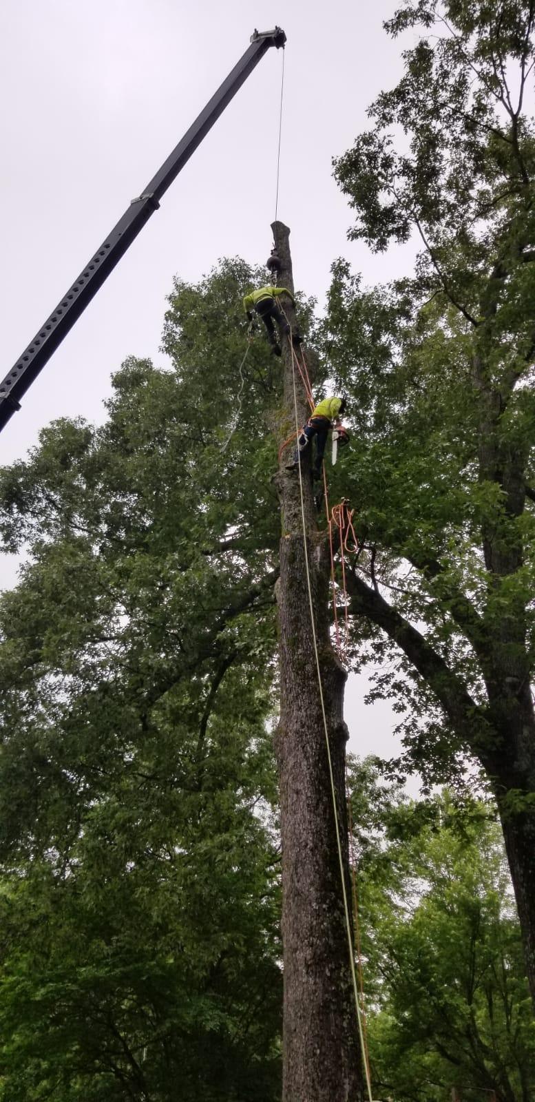 T & J Tree Experts image 6