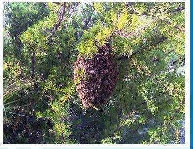 Bee Removal Specialist image 1