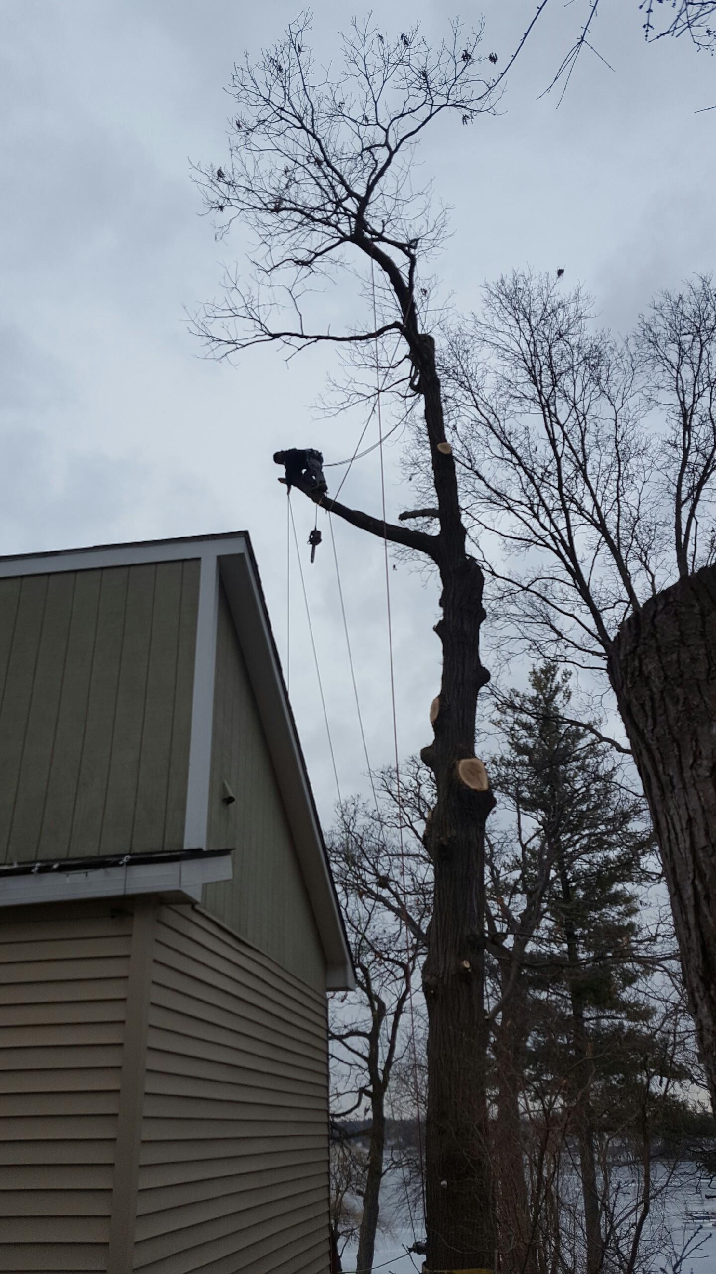 Coffman's Tree Service image 3