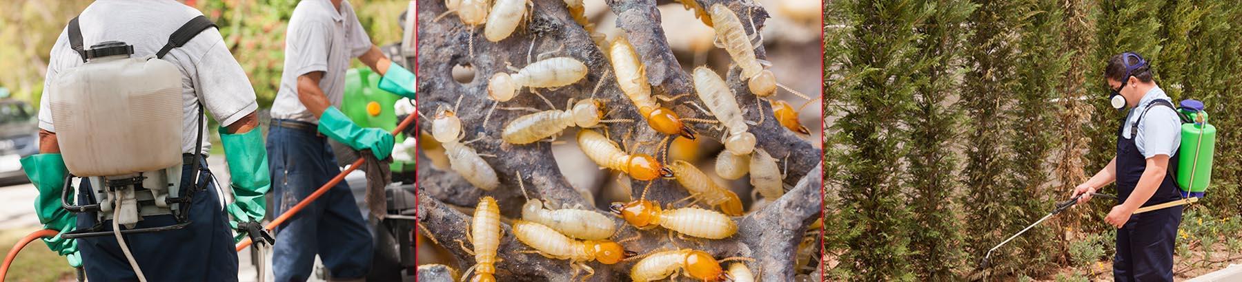 South Bay Termite Control image 2