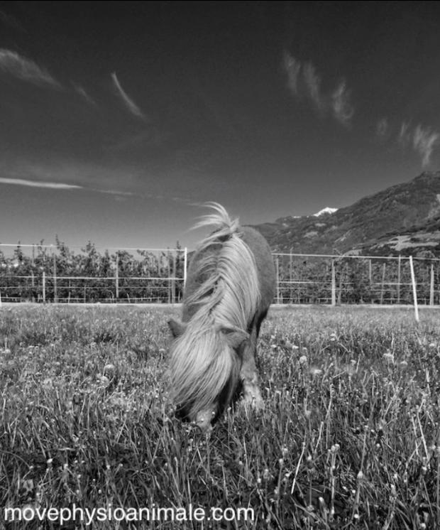 Move physio animale