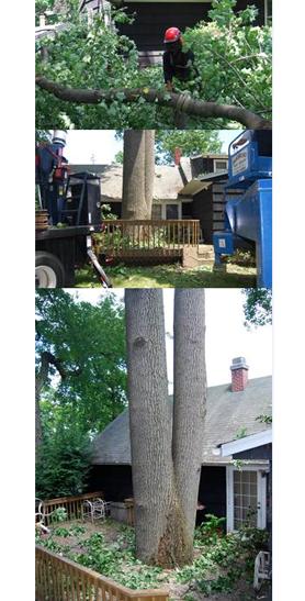 Amoroso Tree Service Inc image 4