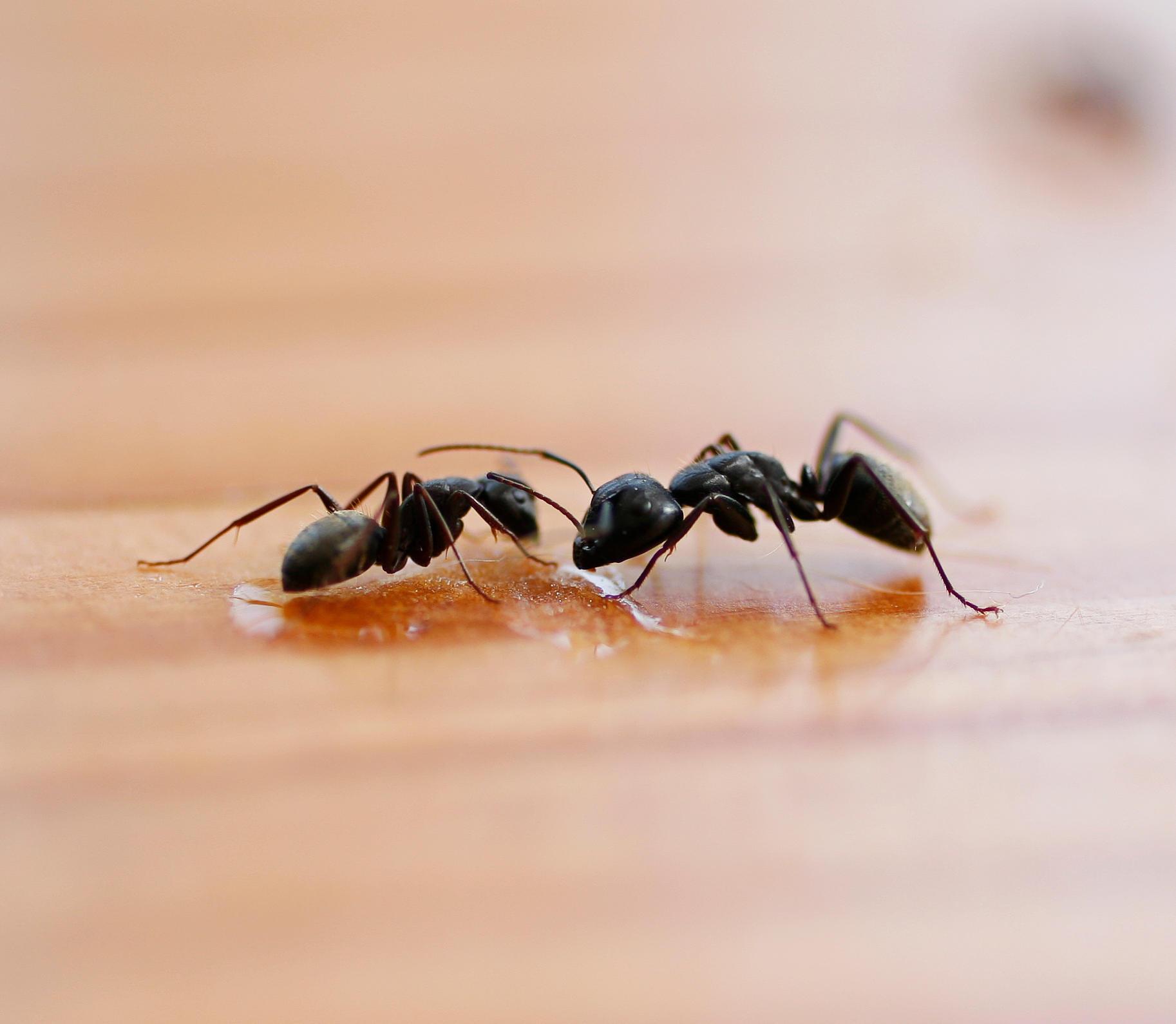 Universal Pest & Termite Elite image 3