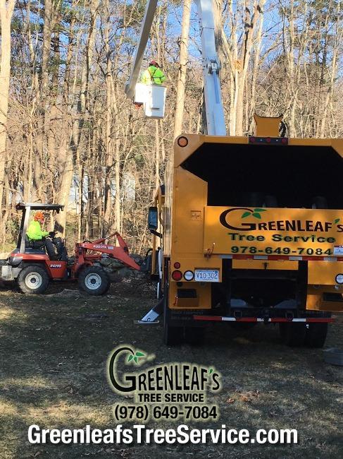 Greenleaf's Tree Service image 25