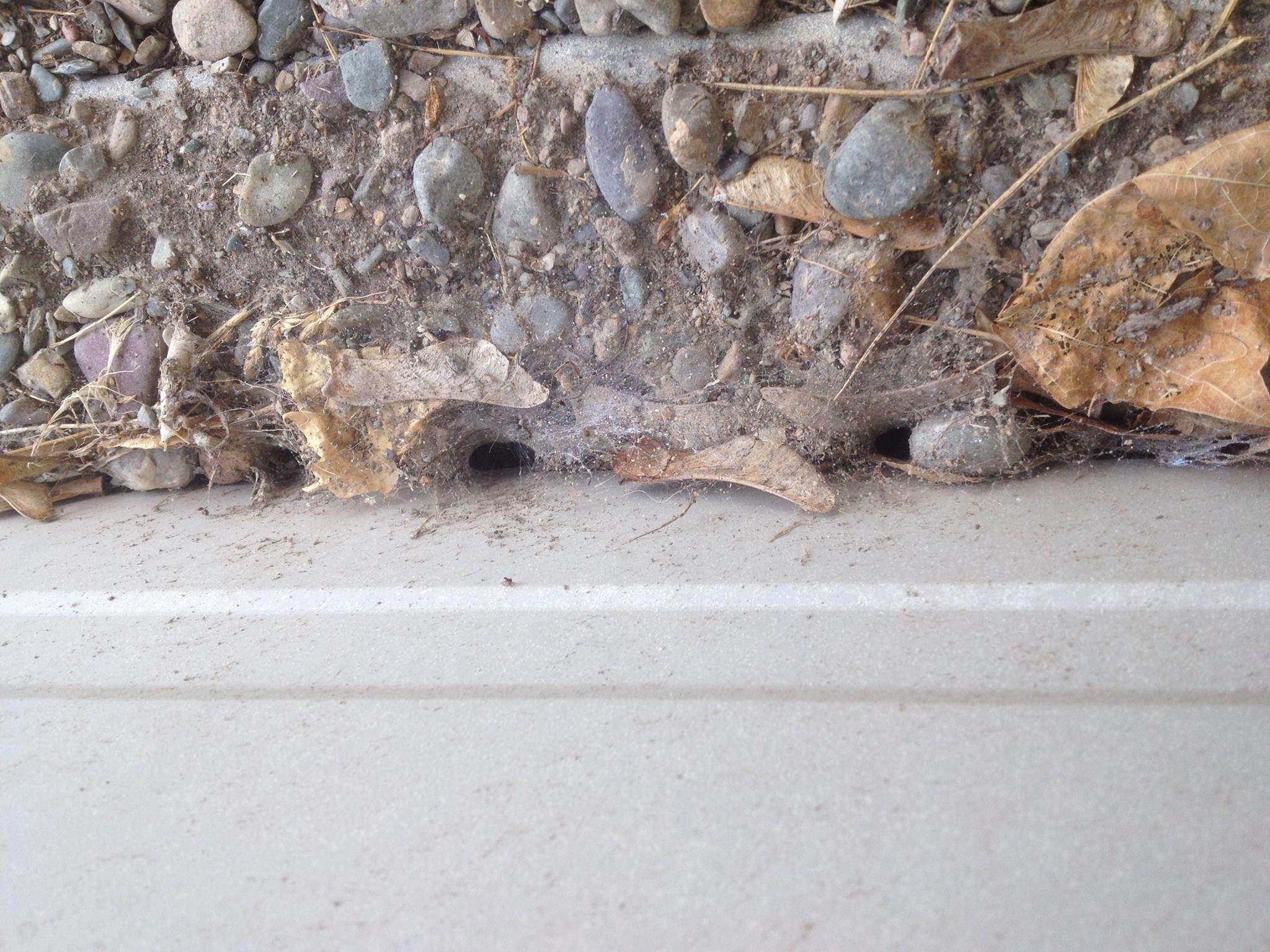 Guardian Pest Solutions image 3