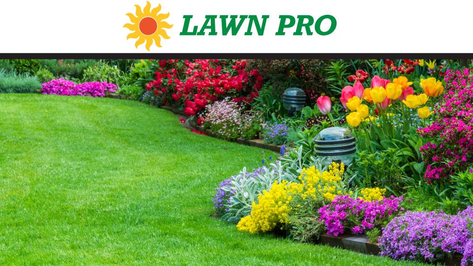 Lawn Pro / Green Leaf image 0