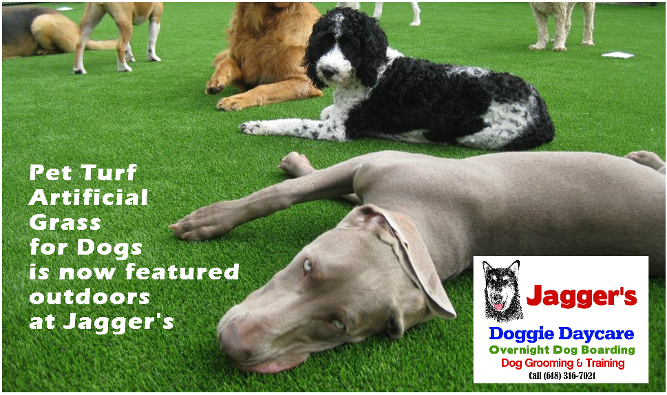 Jagger's Doggie Daycare, Dog Grooming, Training & Boarding image 4