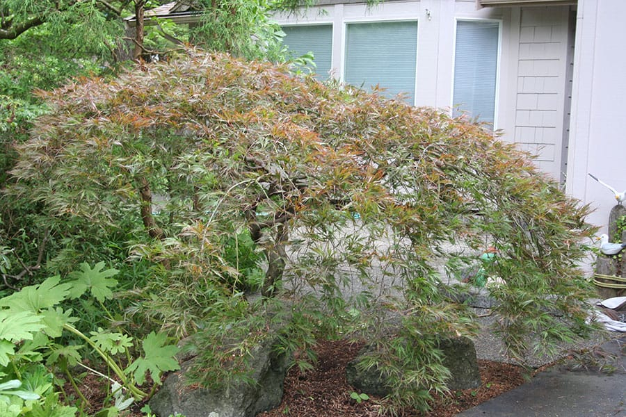 Archon Tree Services, Inc. image 16