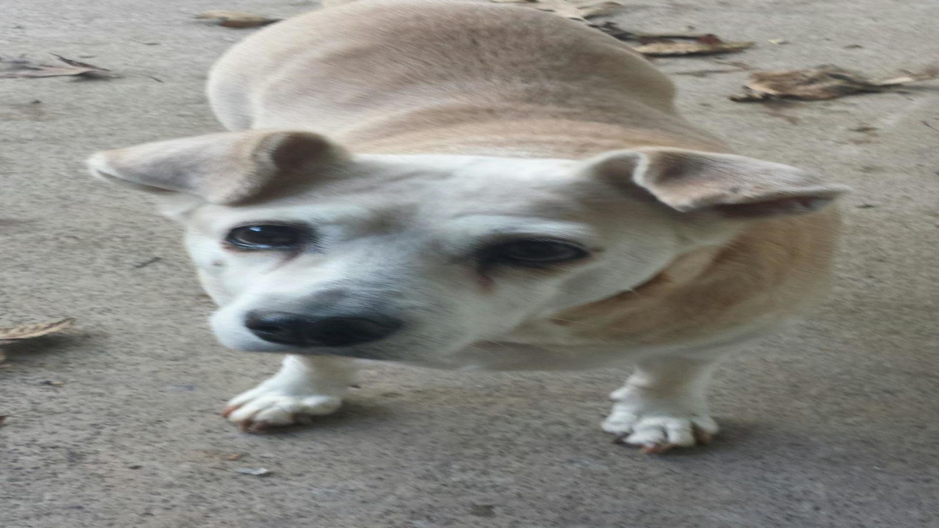 Honor My Pet Crematory image 2