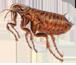 Crown Exterminators image 3